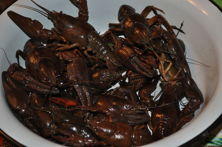 the crawfish is not ready)))