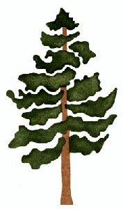 1 pine tree