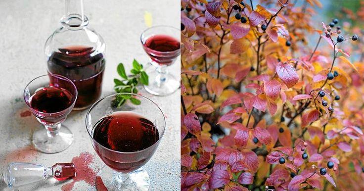 Gör härlig saft av nyttiga aroniabär – bästa receptet | LAND.se