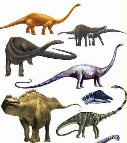 62 best tammy images on pinterest dinosaurs dinosaur - Dinosaure diplodocus ...