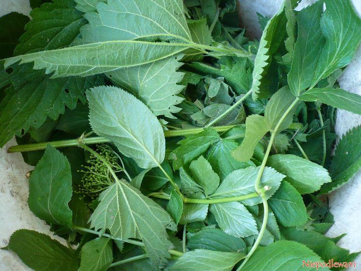 Na tej gnojówce roślinnej dobrze rosną pomidory, trawa czy krzewy i drzewa owocowe. Jej składniki to dziki bez czarny, pokrzywa oraz woda.