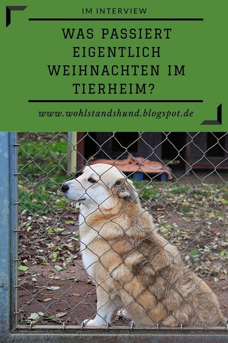 Weihnachten Im Tierheim Interview Mit Leiterin Christina Herrmann Aus Dem Tierheim Schwebheim Tierheim Tiere Kleine Tiere
