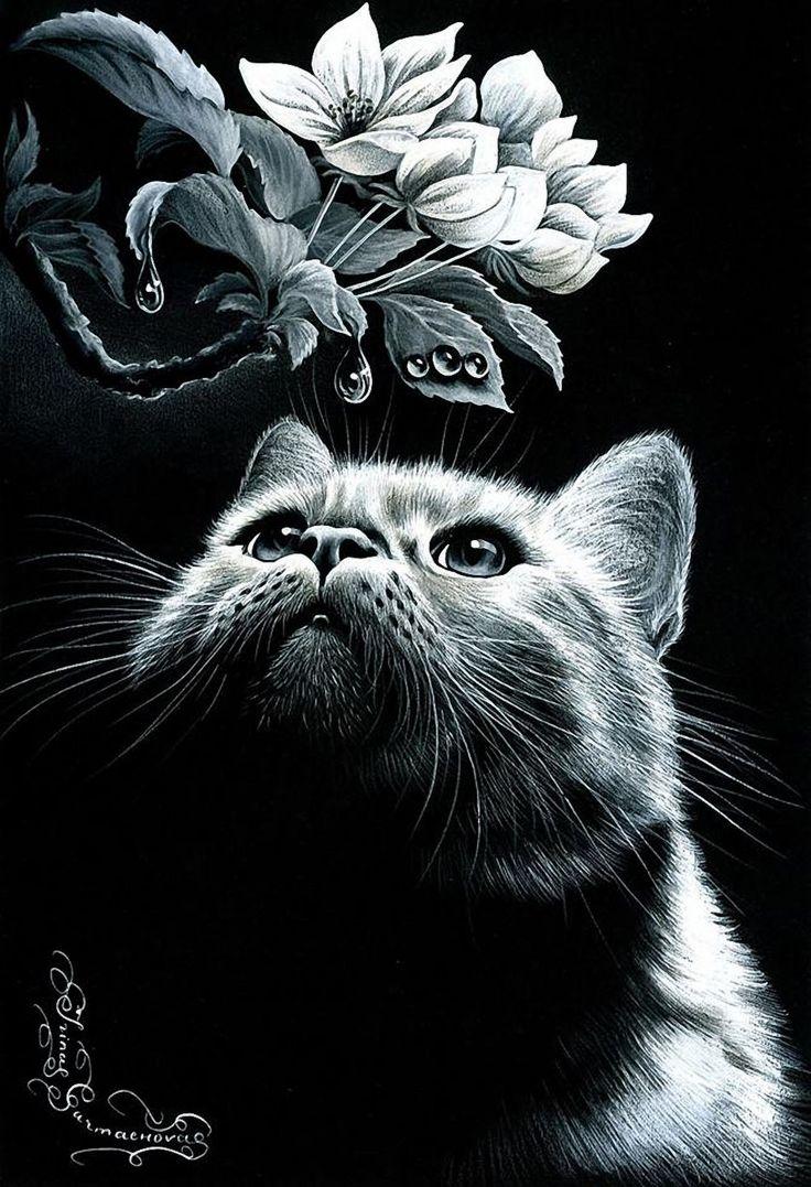 время коты в черно белом цвете картины что обратить