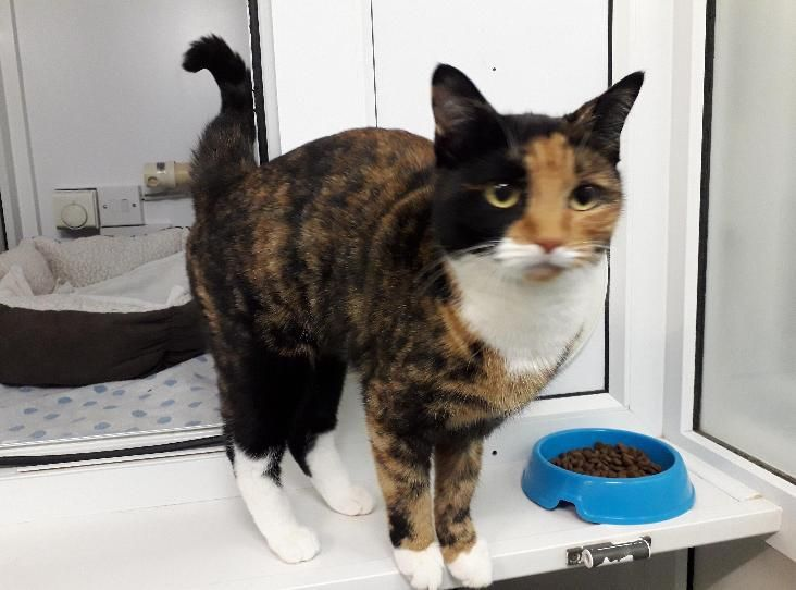 Mittens Is A Pretty Tortie With A Gingery Face She Hasn T Been Here Long But She S Already Winning Us Over With Her Affectionate Per Calico Cat Tortie Mittens