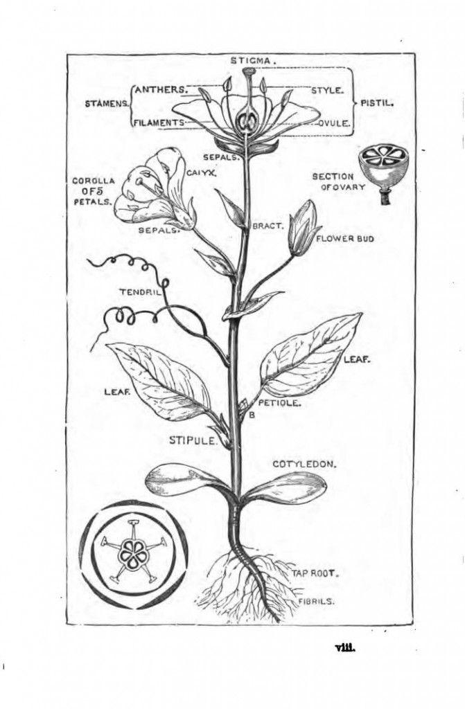 Little Flower Folks: Living Botany Books