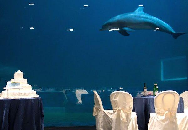 Un Matrimonio festeggiato in mezzo a un mare... amore!