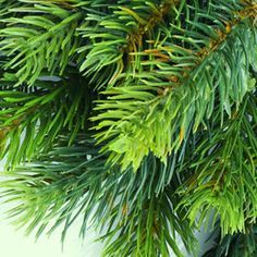 spruce wood for oil fragrance - Google Search