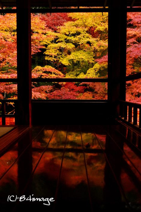 Ruriko-in Temple, Kyoto, Japan 瑠璃光院,京都 #Kyoto #AutumnLeaves #紅葉
