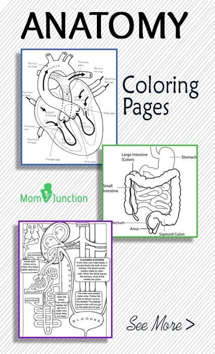 Top 10 Anatomy Coloring Pages-in my browser, several of the download buttons were covered by ads, but these are still excellent and for the most part, accessible.