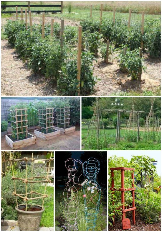 Homegrown tomatoes from the garden are the best. If you want to grow tomatoes, then you will want to make some DIY tomato cages to encourage their growth.