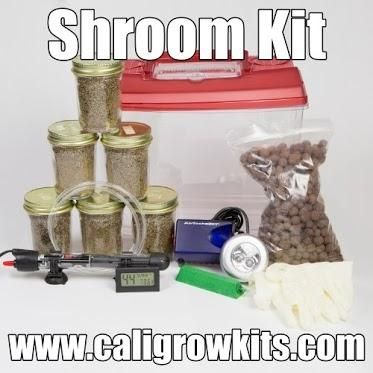Magic Mushroom Kits | Growing Mushrooms At Home With Shroom Growing Kit