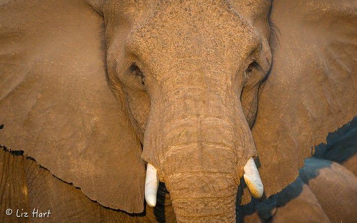 """""""Hello Afrika, tell me how you're doin'..."""" #Okavango #safari"""