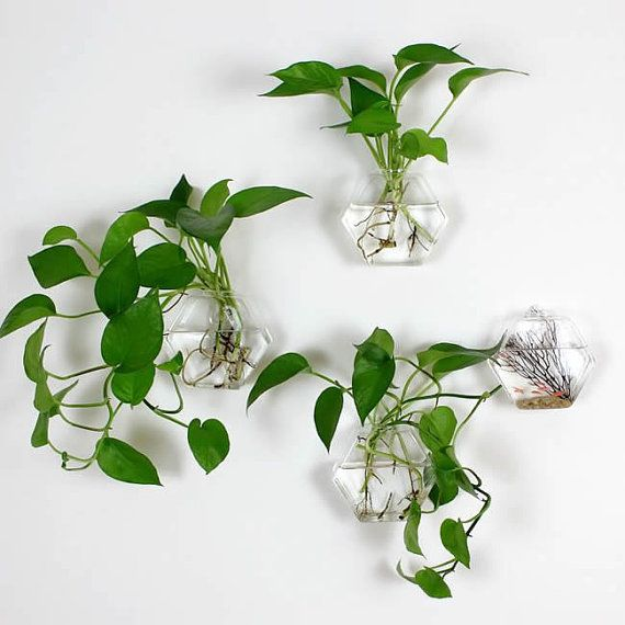 Set of 4 empty hexagon wall terrarium// wall hanging fish bowl//indoor wall planters// green plant wall glass vase