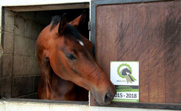 Op zoek naar een kwaliteitsvolle manege of pensionstal?  http://www.allesoverhuisdieren.be/hobby/paardrijden-op-een-goede-manege-of-pensionstal-was-nog-nooit-zo-populair-en-eenvoudig
