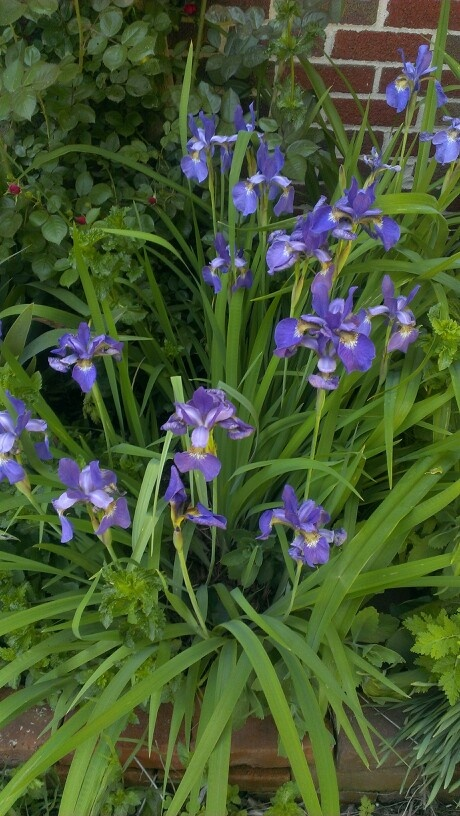 Flower Garden Ideas Northeast 257 best perennial flowers images on pinterest | flower gardening
