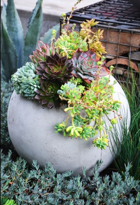 Brightly colored succulents planted in concrete balls