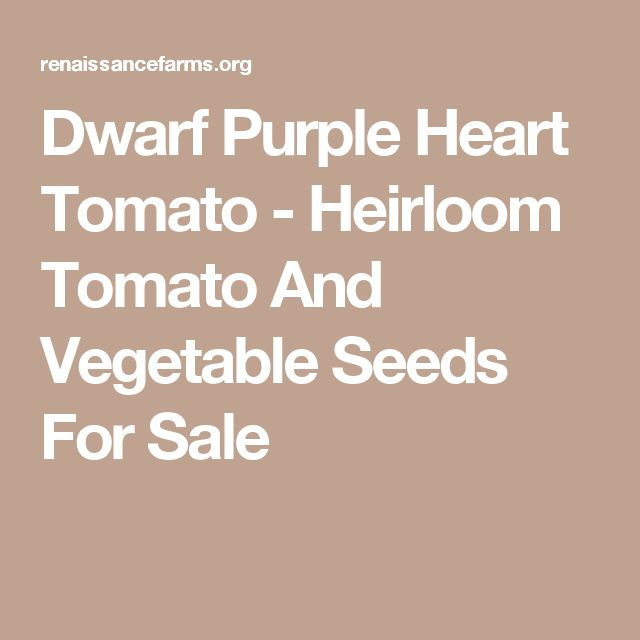 Dwarf Purple Heart Tomato - Heirloom Tomato And Vegetable Seeds For Sale
