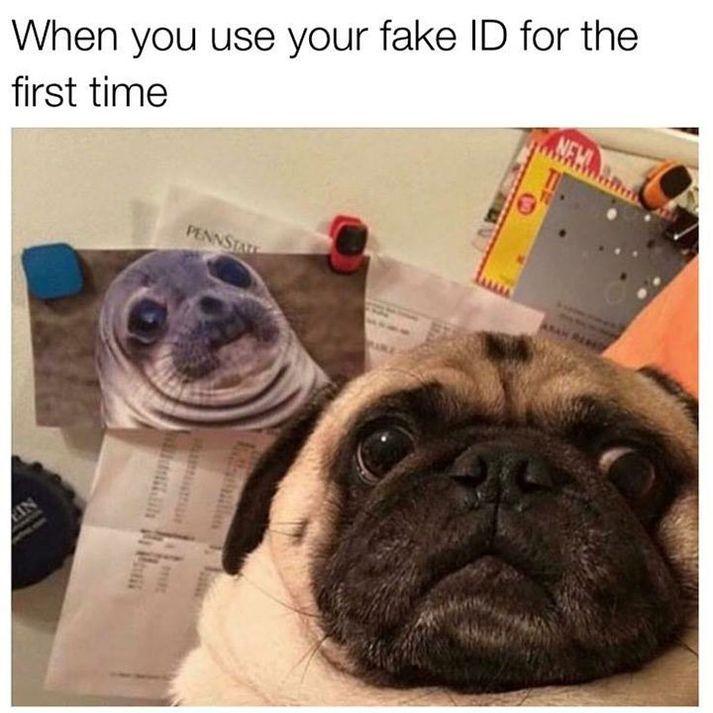 70 Funny Animal Memes