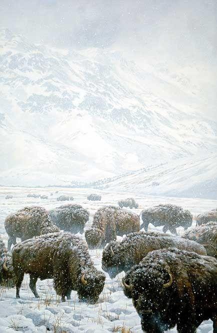 Winter Grazing Bison