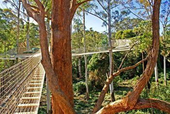 Tree top walk at Mount Tamborine