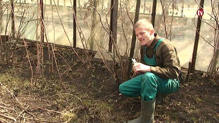 Kertészkedjünk! A kert tavaszi frissítése.