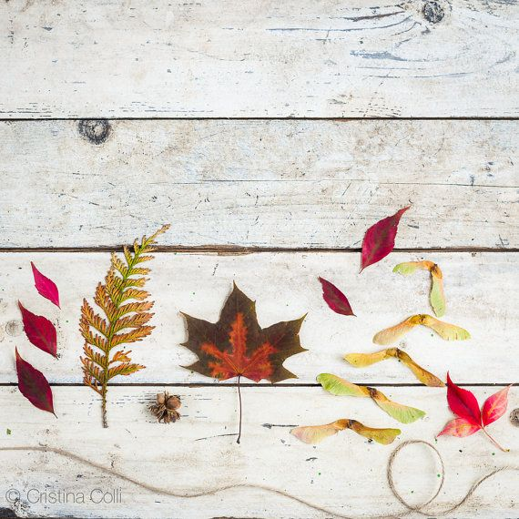 Botanical still life photography - Leaves, seeds and cobnuts on distressed wood - Whimsical Autumn wall art - Home decor Giclée print  available in my Etsy shop - Photography & Styling by Cristina Colli