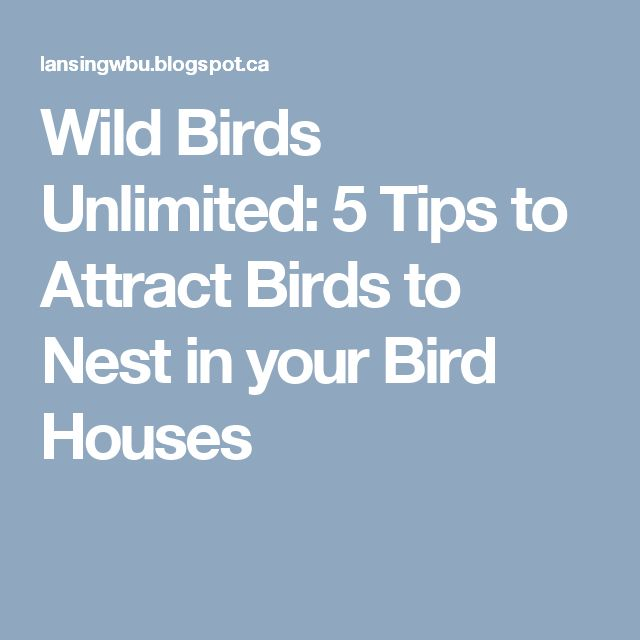 Wild Birds Unlimited: 5 Tips to Attract Birds to Nest in your Bird Houses