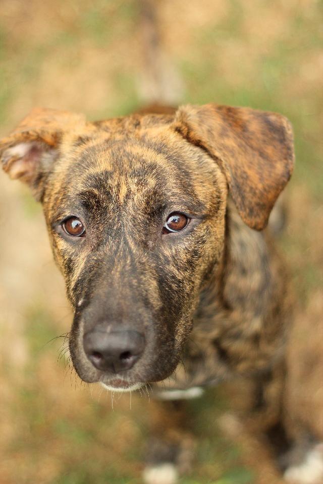Vira-lata - Os cães sem raça definida