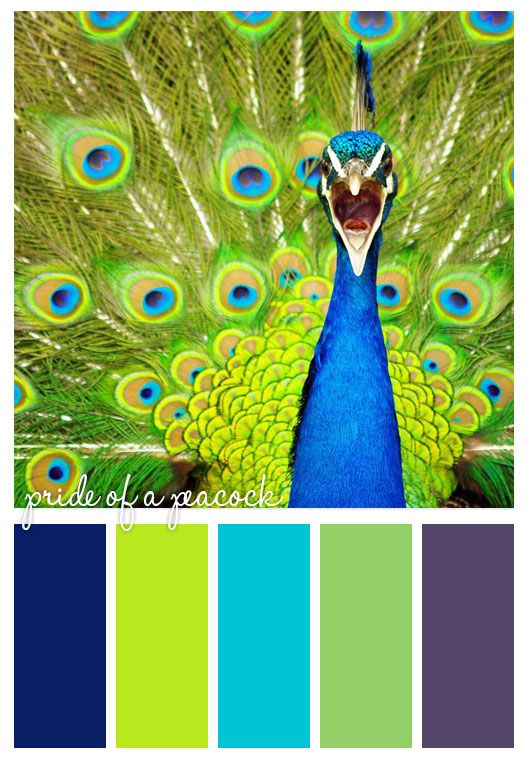 pride of a peacock will be my new office color scheme yes