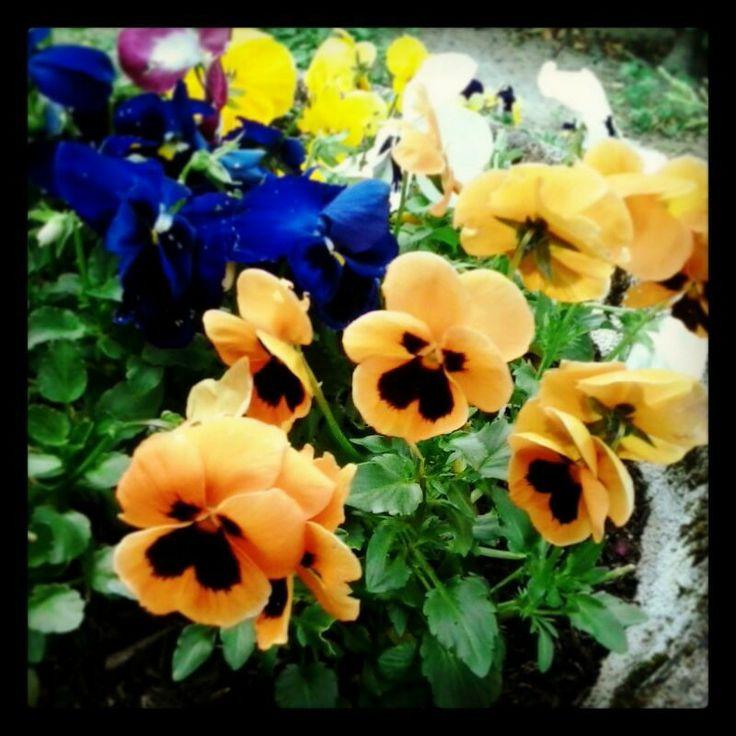#fiori #gialli #profumo #primavera