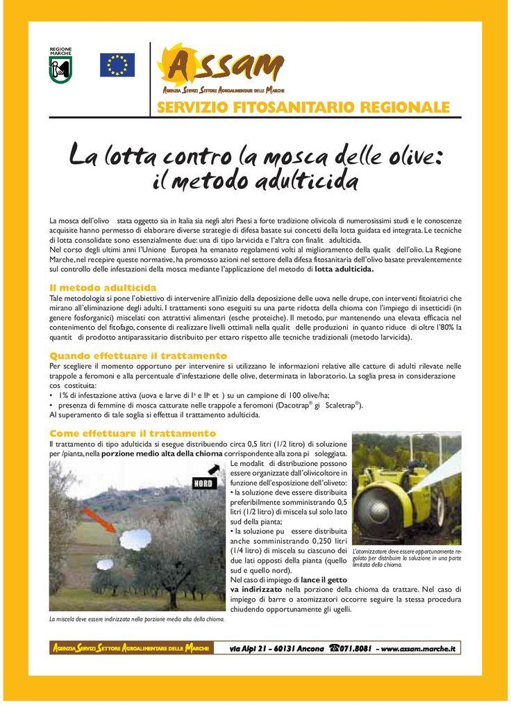 Link all'articolo in PDF: http://meteo.marche.it/agrometeo/notizie/schede_divulgative/lotta_mosca_delle_olive.pdf