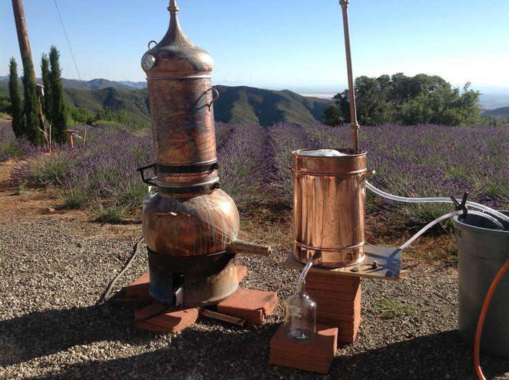 Lavender distillation 2013 at Girl on the Hill....110 liter copper still