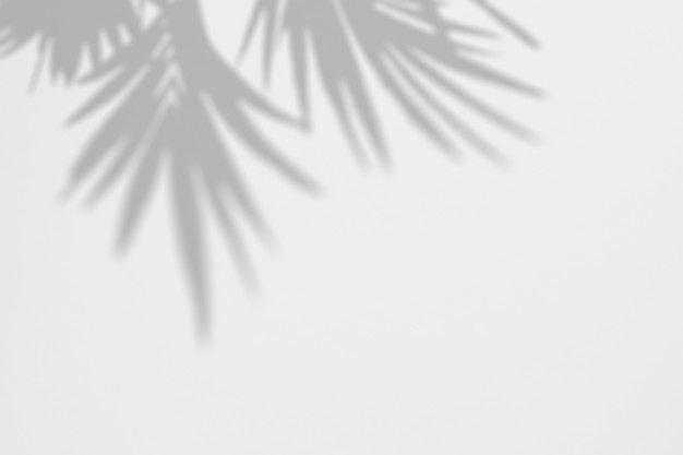 Shadows Tropic Palm Leaves On A White Wall Shadow Shadow Logo Leaves Wallpaper Iphone