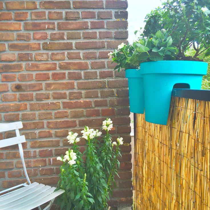 Sweet balcony #balcony #plants #green #cute #bamboo