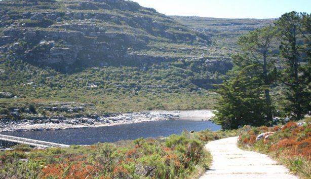 Hiking Route:The other side of the mountain. Camps Bay. 1-Through Kirstenbosch to Bridle Path and down Nursery Ravine:6.5h, including lunch.  2-Up from Constantia Nek to Bridle Path:4-6h 3-cross Echo Valley to the Cable Car:8 h, can be shortened by going down in Cable Car.