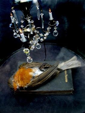 117 Best Taxidermy As Art Images On Pinterest Taxidermy