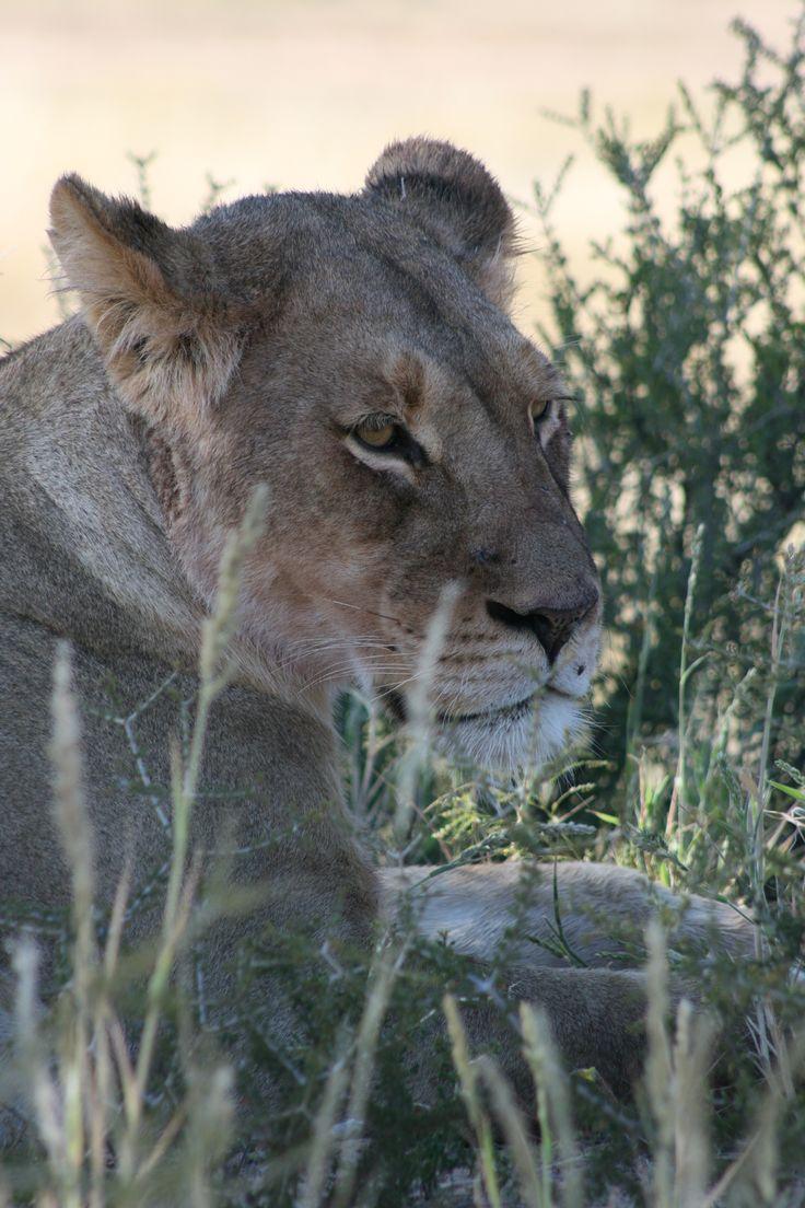 Ehoshia, Namibia