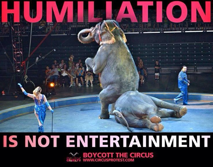 should we ban keeping of animals in circus Transcript of should we ban the keeping of animals in zoos and circuses much of the money that zoos and circuses profit isn't being spent on saving animals, but spent on making the zoo appealing to customers.