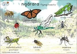 maori insects - Google Search