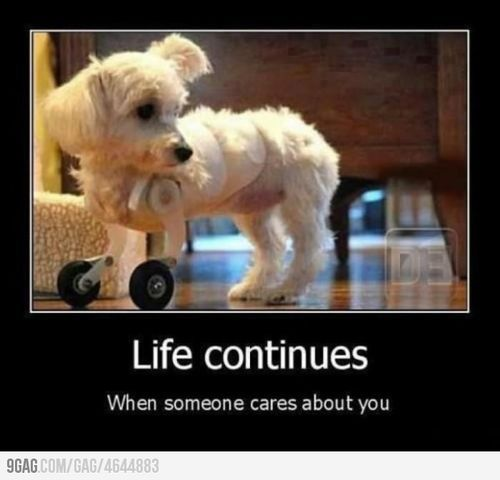 careHeart, Inspiration, Little Puppies, Life Continuous, Pets, Things, True Stories, Little Dogs, Animal