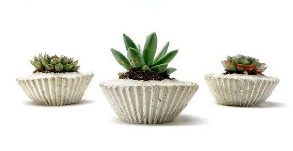 how to get rid of moss in flower pots