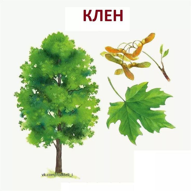 Картинки с подписью деревьев