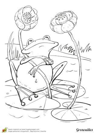 Coloriage Grenouille dans sa mare adorée