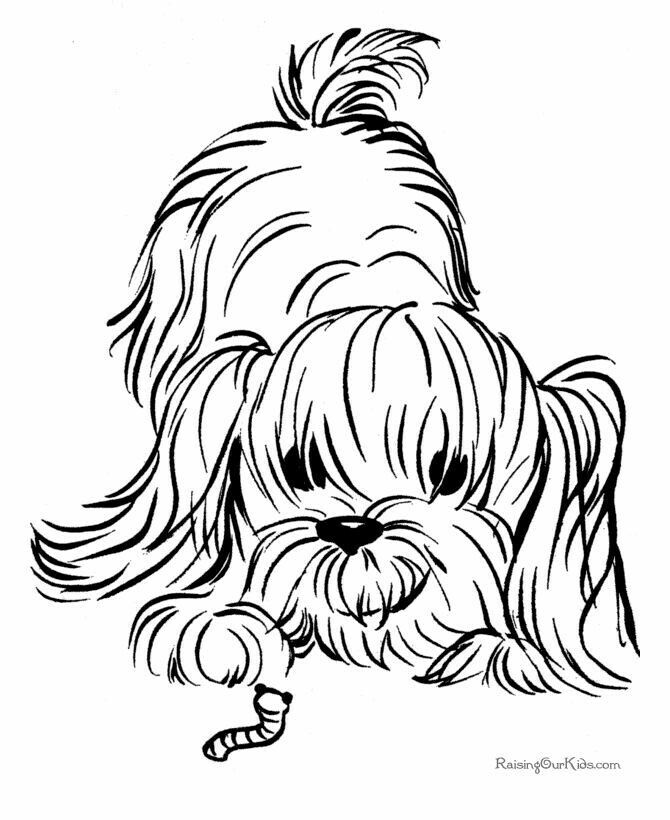 find this pin and more on coloring pages by kyachetta - Shih Tzu Coloring Pages