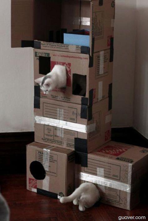 Unas cajas, el mejor regalo para tus gatos