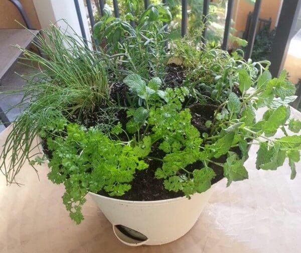 Jak samodzielnie hodować zioła w kuchni? - Zdrowa Dieta, Odchudzanie i przepisy kulinarne