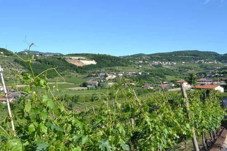 If you sleep at Fratelli Vogadori this is the panorama! www.AmaroneValpolicella.org