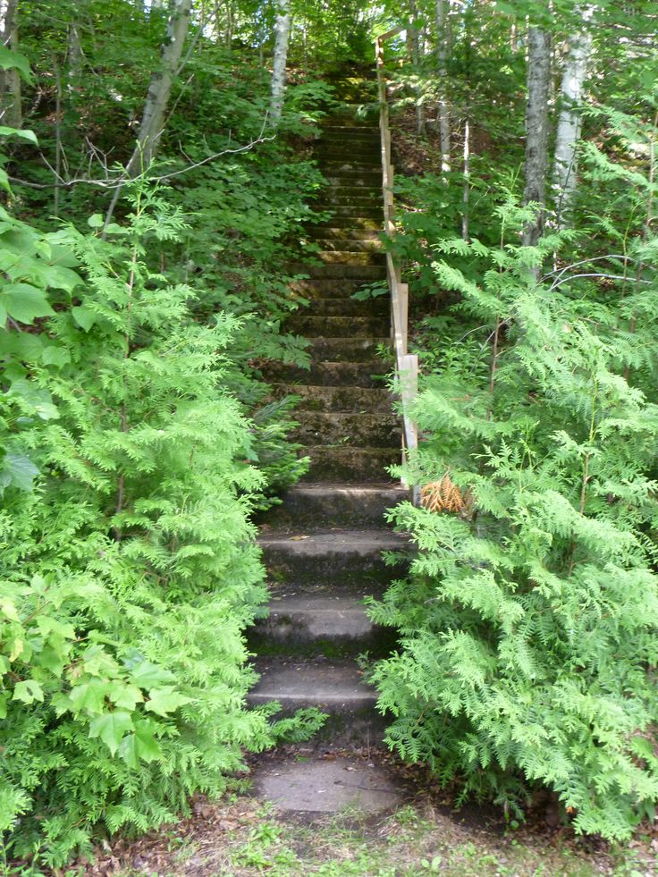 The path to our cabin St-Donat QC