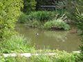 Čabárna - vodní park u Kladna. Lážnovský vodní park Čabárna Dagmar Lážnovská 27341 - Brandýsek IČ: 46431233 Tel.: +420 607 530 652 Email: info@cabarna.cz