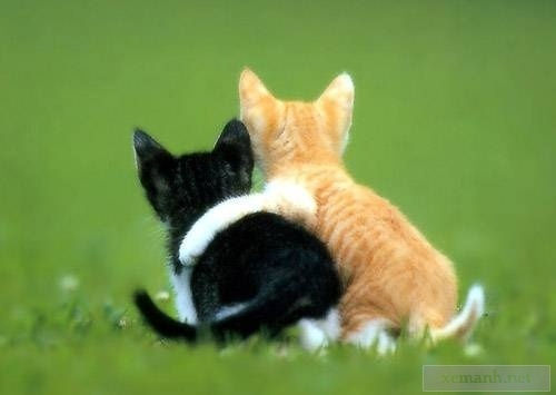 Friend !: Cats, Best Friends, Funny Animal Pictures, Bestfriends, Baby Kittens, Bff, Cat Hug, Baby Animal, Real Friends